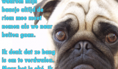 hond uitlaten hond perspectief
