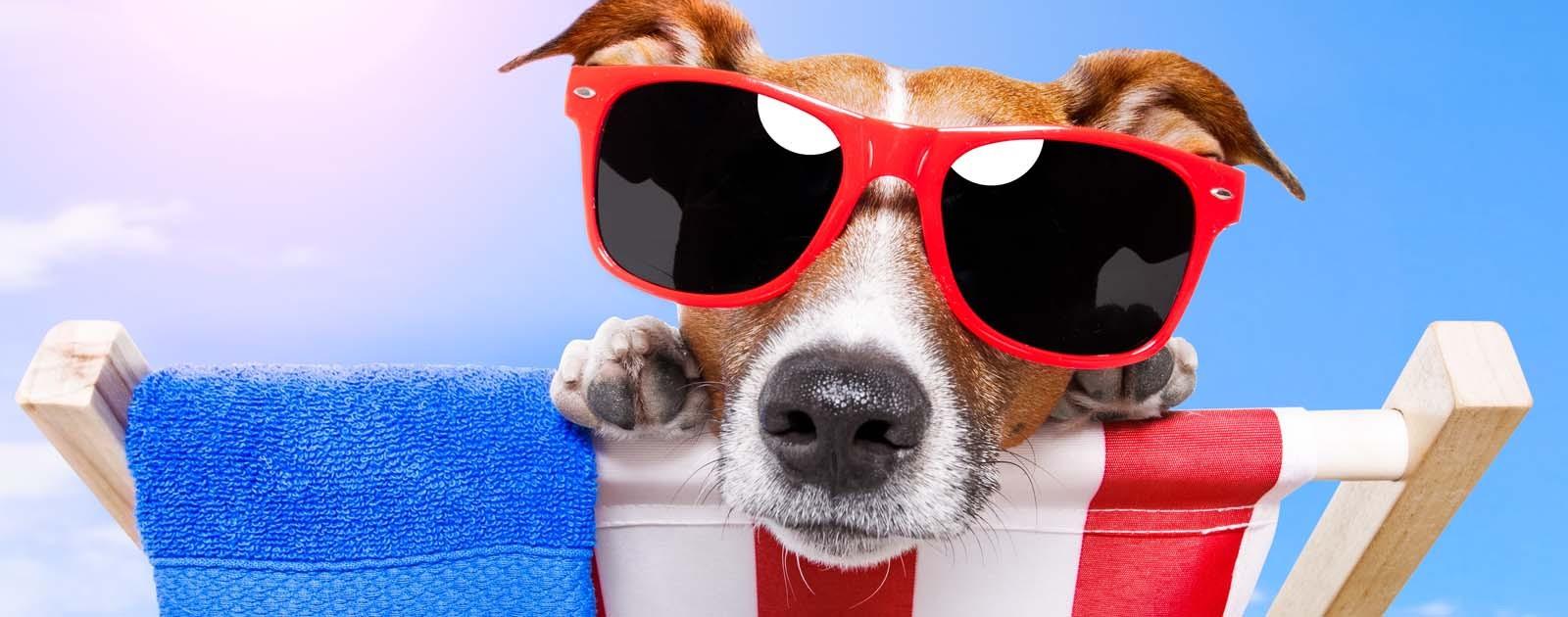 8 tips voor honden tijdens deze warme dagen