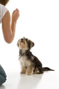 honden trainen