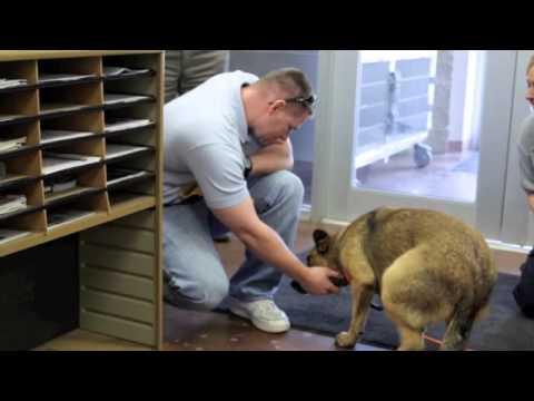 Dit is waarom het zo belangrijk is om je hond te chippen!