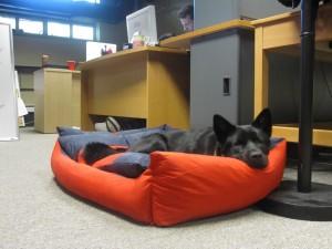 je hond mee naar kantoor, goed voor de werksfeer