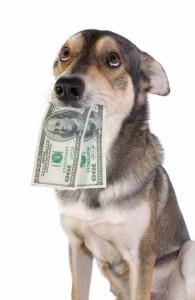 de kosten van een hond