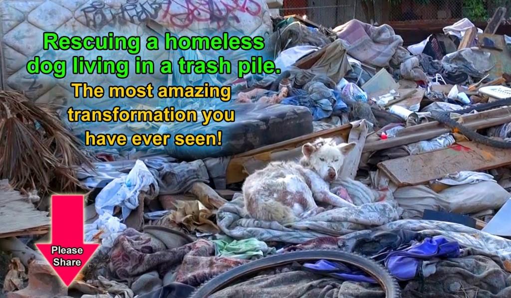 Miley leeft op een vuilnisbelt , gelukkig krijgt ze een tweede kans!