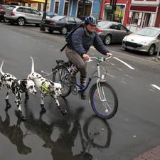 fietsen hond