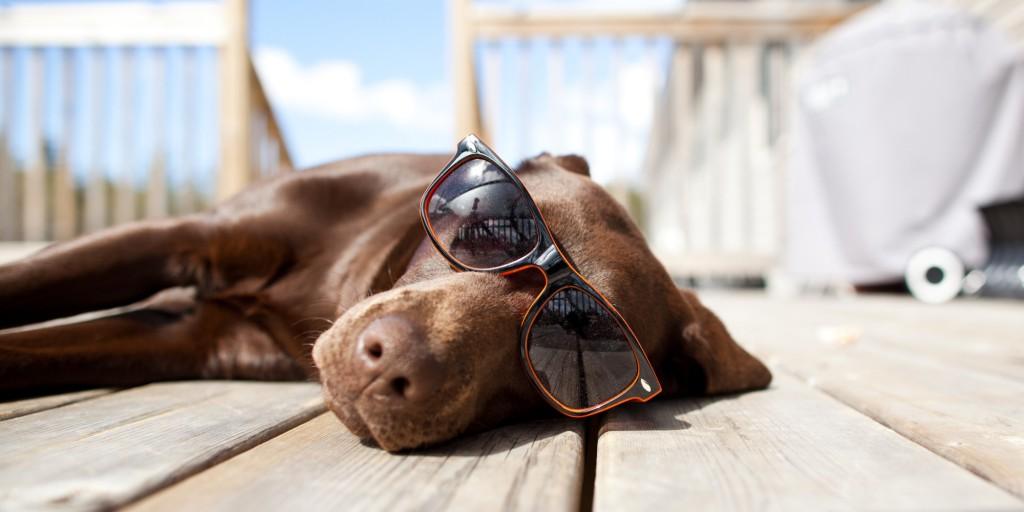 Bescherm je hond tegen de zon met zonnebrand!