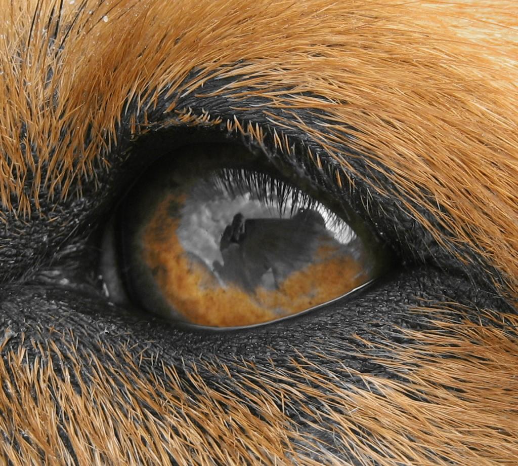 Zijn honden kleurenblind?