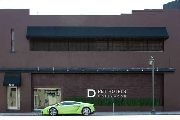 D Dog Hotel Logeren in luxe...