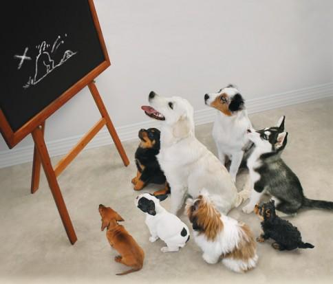 Het doel van puppycursus