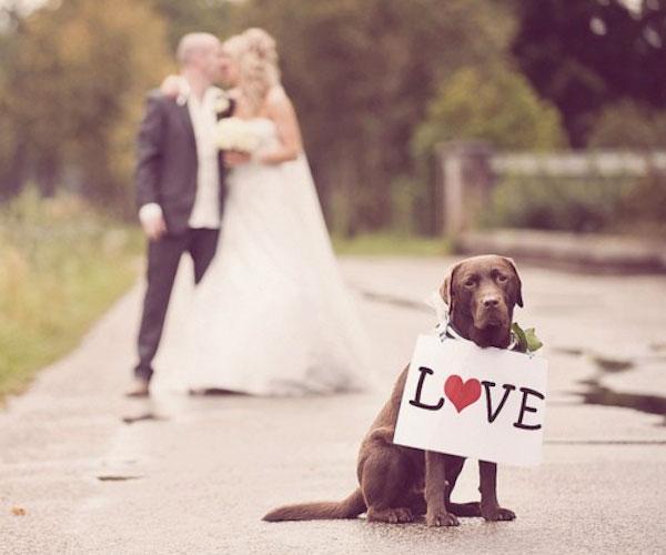 Je hond bij je huwelijk