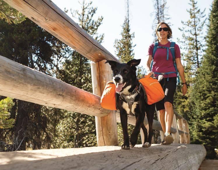 Rugzak voor honden; wanneer en hoe gebruiken