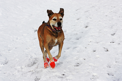 Maak de poten van je hond winterproof