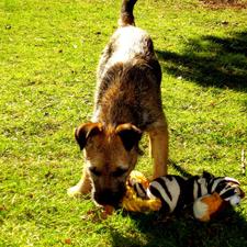 spelen met hond