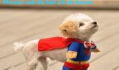 superhond