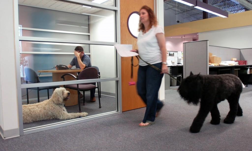 Je hond mee naar het werk, goed tegen stress op de werkvloer!