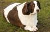 overgewicht honden