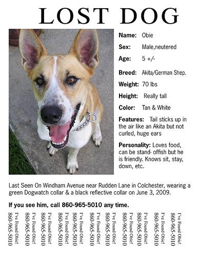 Wat te doen als je hond vermist is?