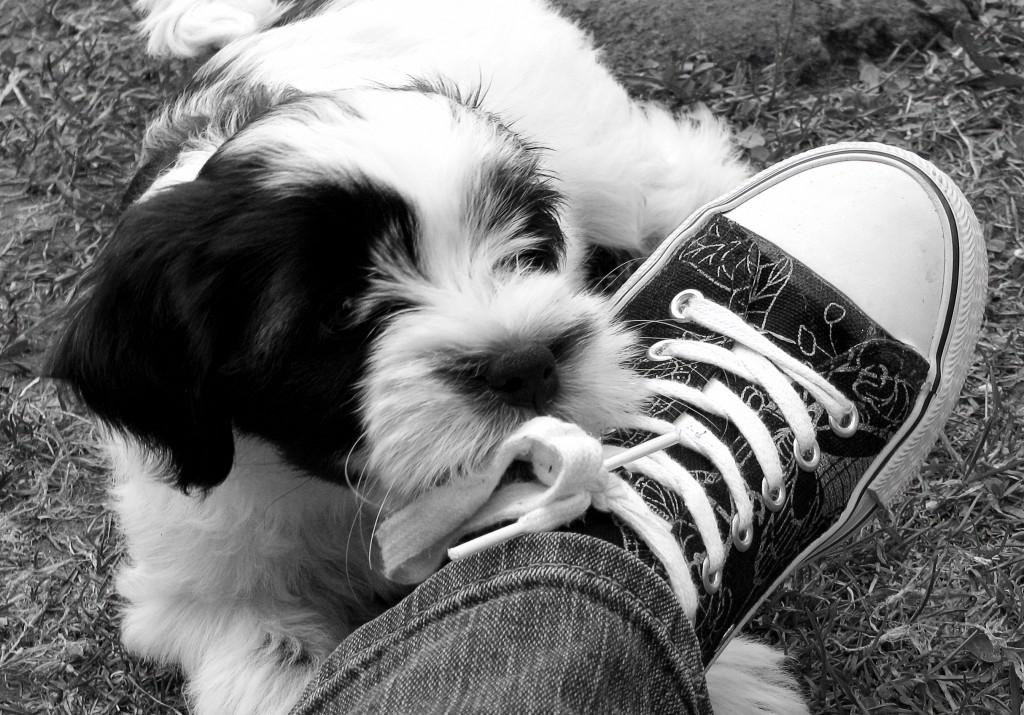 Help, mijn hond kauwt op mijn schoenen